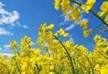 Dzięki badaniom odmian roślin rolnicy zyskują finansowo