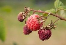 Susza rolnicza w Polsce – coraz większe żniwo