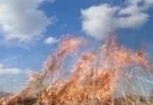 MSW: w marcu prawie 50 tys. pożarów łąk