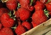 Prawie 4 mln euro na promocję owoców jagodowych