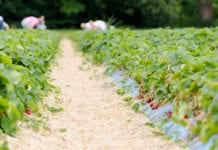 Ważne dla rolników zawierających umowy o pomocy przy zbiorach