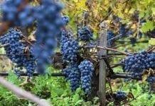 Deklaracje dotyczące wyrobu wina do 30 października