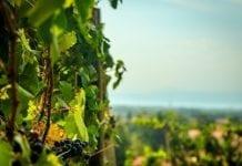 Zezwolenie na zwiększenie naturalnej objętościowej zawartości alkoholu w winach