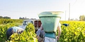 Wzrost eksportu gruzińskiego wina