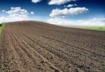 W rolnictwie sezonowe pogorszenie koniunktury