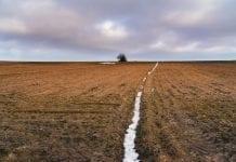W roku 2017 rolnicy wydzierżawili ponad 50 tys. ha gruntów