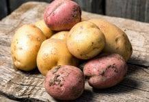PIORiN radzi: nie przywoźmy bulw ziemniaka spoza Europy