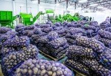 Import ziemniaków i pomidorów do UE
