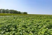PepsiCo zwiększy liczbę współpracujących gospodarstw rolnych o 30 proc.