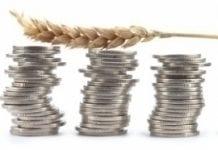 Ponad 2,7 mln zł dopłat do materiału siewnego w Lubuskiem
