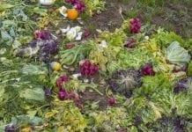 W UE na śmieci trafia rocznie 20 proc. produkowanej żywności