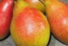 Unijne zapasy jabłek i gruszek w kwietniu