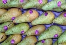 Liderzy biorą połowę rynku gruszek