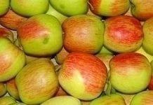 W 2015 r. więcej jabłek, mniej kapusty