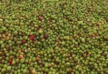 Belgowie niszczą jabłka i gruszki. Jak działa wycofywanie z rynku?