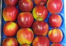 """Kampania """"Europejskie jabłka dwukolorowe"""" w Chinach i ZEA"""