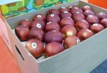PIORIN: Indyjskie wymagania fitosanitarne względem polskich jabłek