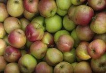 Koniec sezonu jabłka przemysłowego?