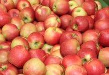 Jabłka w Kazachstanie. Mniej z Polski, więcej z Chin