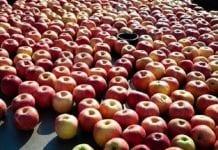 KZGPOiW odpowiada na apele i zarzuty w sprawie cen jabłek