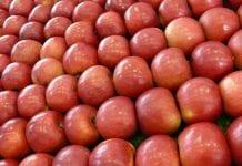Pozostałości środków ochrony roślin w pytaniach i odpowiedziach – sesja pytań od internautów podczas konferencji MTAS FruitPro