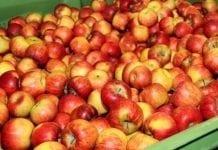 Podano współczynnik przydziału dla jabłek i gruszek