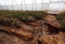 Woda zniszczyła uprawy ogrodnicze w Kenii