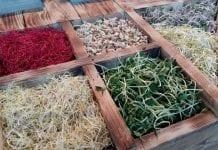 Mikrowarzywa od czosnku po szparagi, czyli holenderski koncept