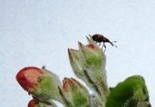 Piernikowe owady i świecące skorpiony w Krakowie