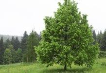 Przybędzie kolejny milion drzew