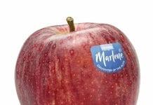 Odświeżony wizerunek marki jabłek. Nowa Marlene®