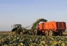 Koniunktura w rolnictwie