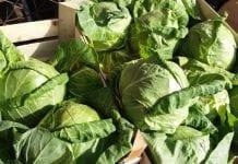 Ceny warzyw na rynku hurtowym