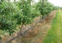 Nowy serwis nawodnieniowy dla sadowników