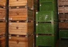 Lutowy stan zapasów jabłek i gruszek w UE