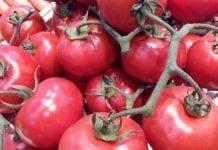 Spadają ceny rosyjskich pomidorów