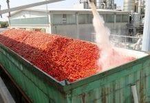 W Rosji więcej własnej pasty pomidorowej
