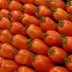 Wzrost eksportu marokańskich pomidorów do UE