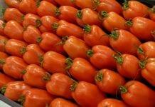 Pomidory bez zapylania i bez nasion