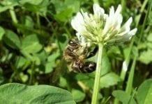 Badaczka z Lublina rzuca wyzwanie chorobom pszczół