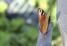 W Krakowie powstał ogród motyli