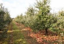 Maliszewski: powróćmy do rekompensat za karczowanie sadów