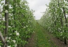 Przymrozki w Europie. Zagrożone uprawy w Holandii, Belgii i we Włoszech