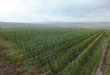 Iran – niedoceniona potęga w produkcji jabłek
