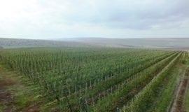 Wystrzałowa majówka w Mołdawii