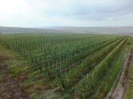 sady w Mołdawii