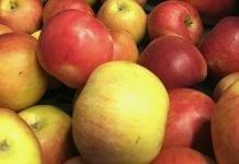 ARiMR podała współczynnik przydziału dla jabłek i gruszek