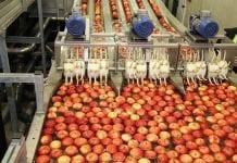 Organizacje producentów mają więcej czasu na przygotowanie programów