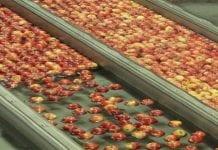 Ceny jabłek w Rosji w pierwszej połowie października