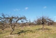 Zmiana zasad przyznawania dopłat do sadowniczych upraw ekologicznych